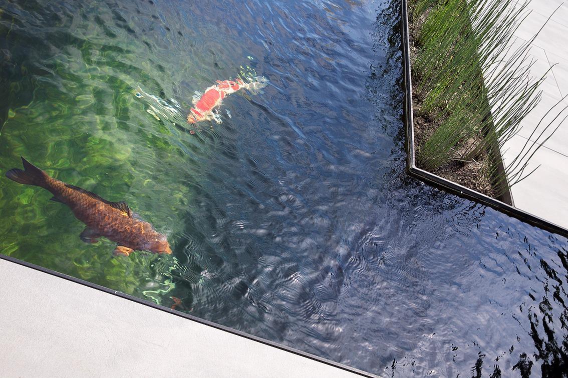 lauper-piscine5.jpg